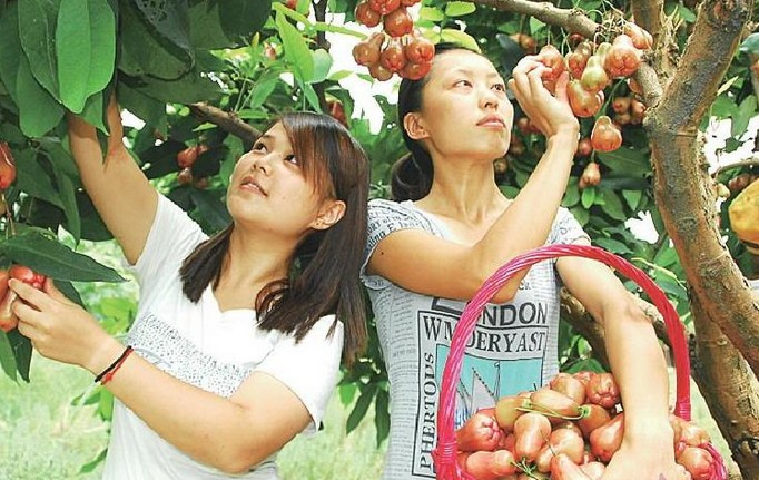 传统农业产业化