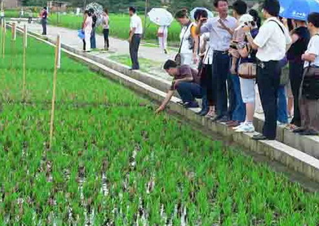 稻+灯+鸭等生态立体