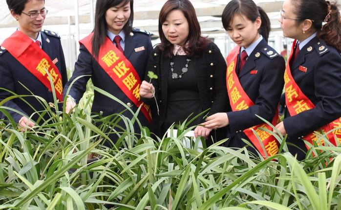 妇女推进高效生态农业发展