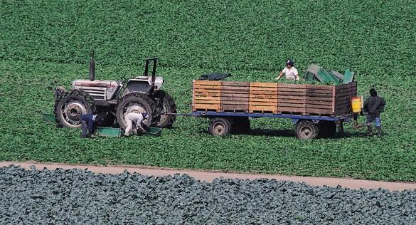 国外农业状况