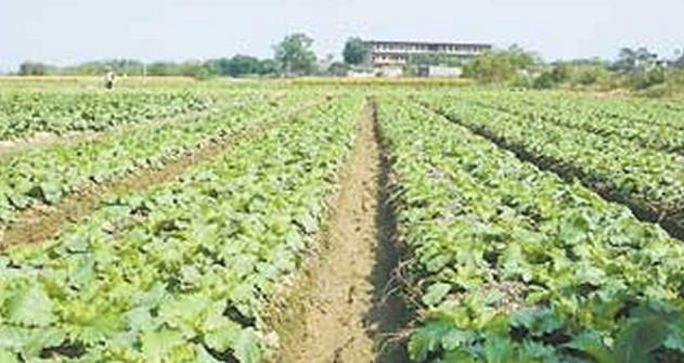 横县生态农业
