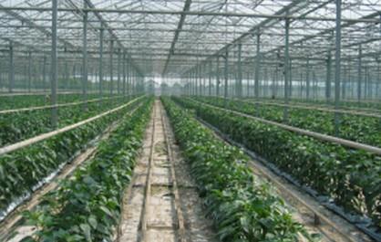 加快转型发展的江苏现代农业