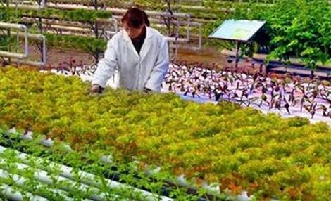 聚焦三农推进农业科技创新