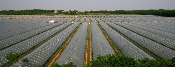 科技开发为一体的特色生态农业