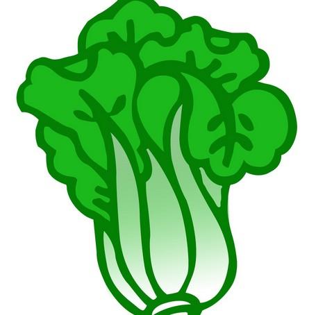绿色食品白菜