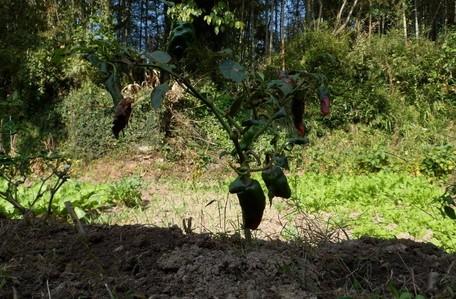 绿色食品的种植环境