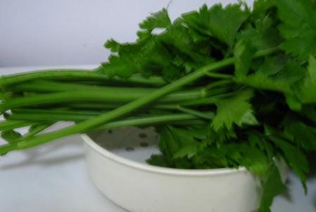 绿色食品香菜