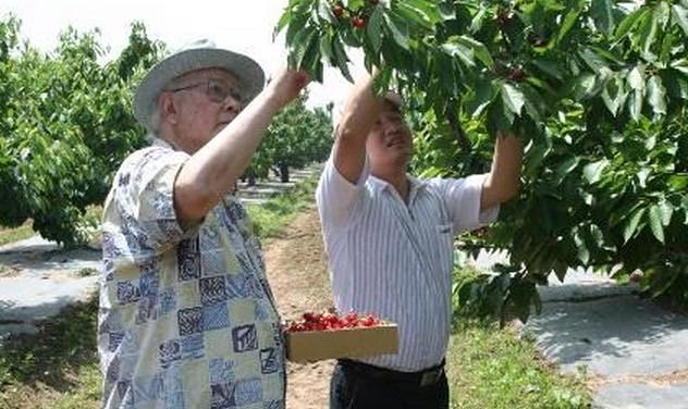 农业草莓采收