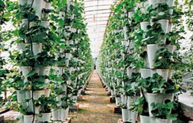 农业产业化水平的提高