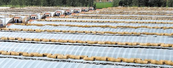 农业大棚建设状况