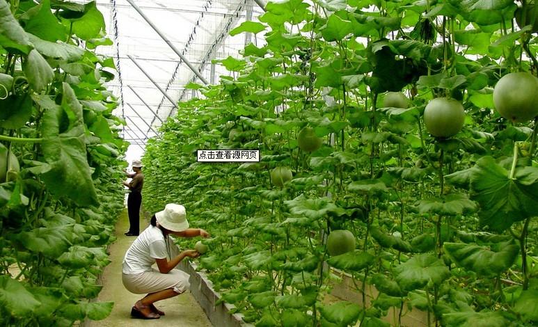农业大棚蔬菜