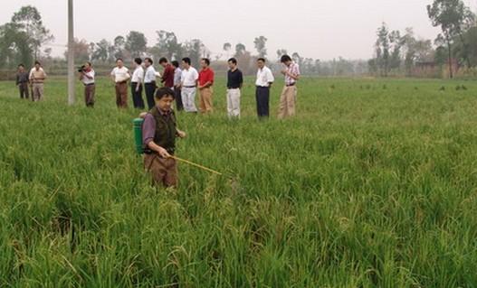 农业稻田施药