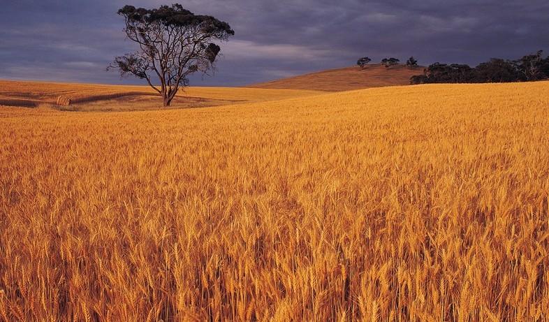 农业稻田2