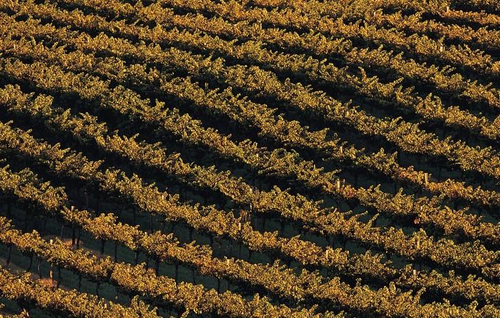 农业的行业视角