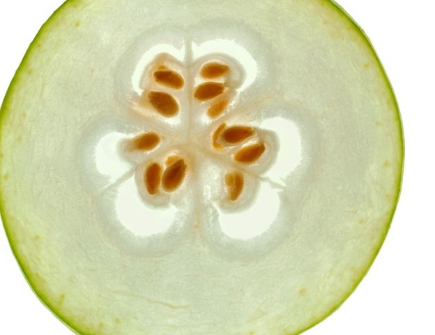 农业冬瓜介绍