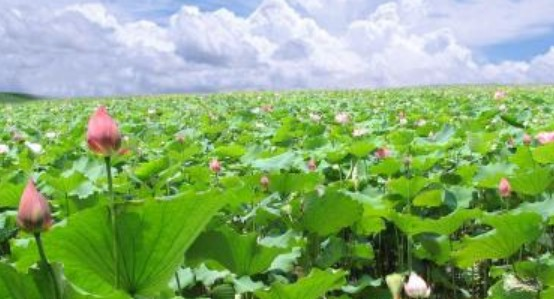 农业发展的重大进度