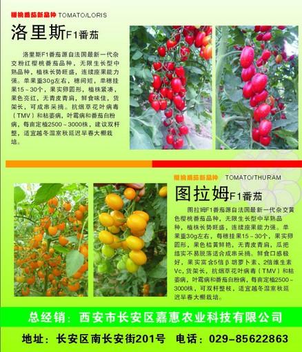农业番茄科技介绍