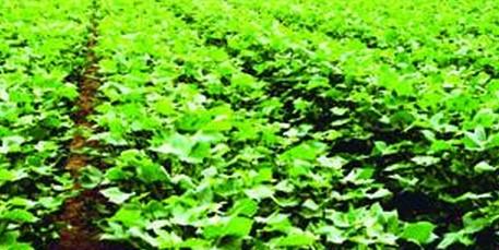 农业科学院创新成果