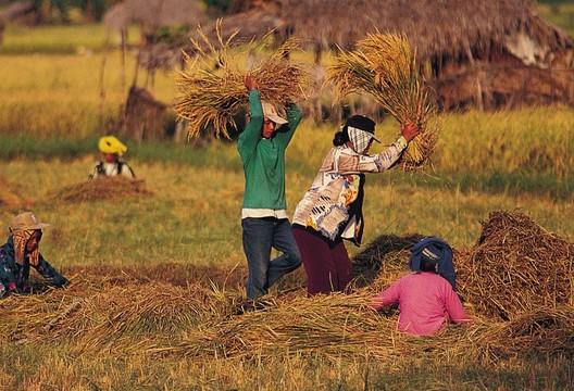 农业劳作的美