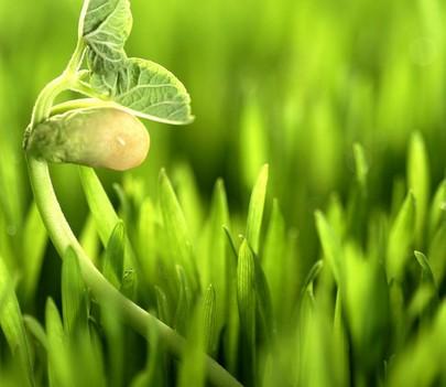 农业绿叶幼苗