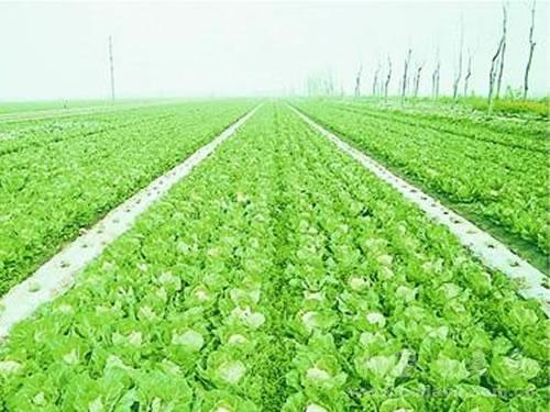 农业农田2