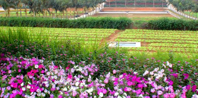 农业生态旅游
