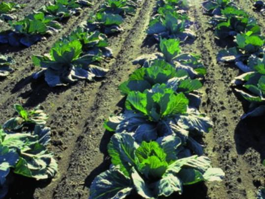 农业蔬菜分布状况