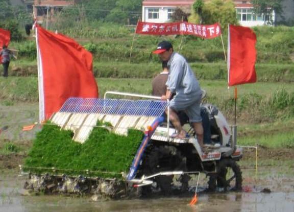 农业水田耕种