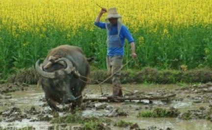 农业水田耕种2