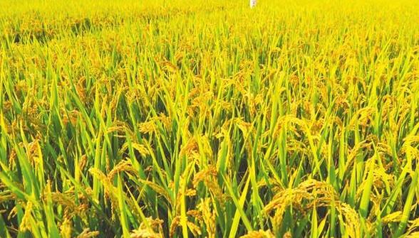 农业现代化的难点和突破