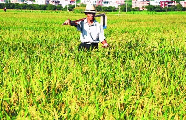 农业小麦成熟时期