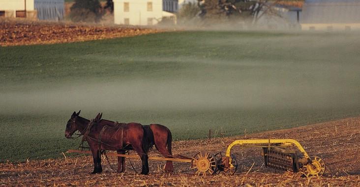 农业写真图