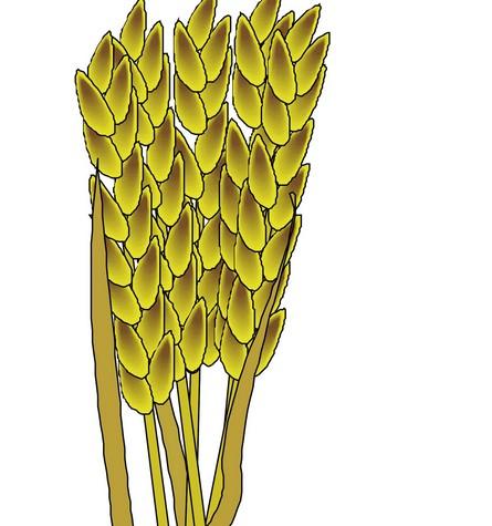 农业与庄稼矢量图