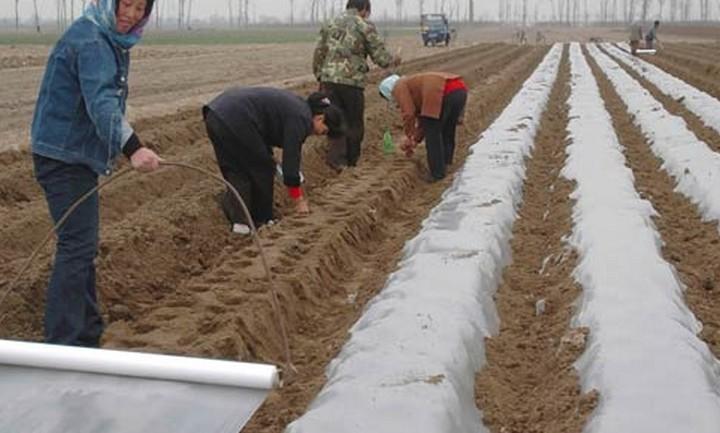 农业中的人们
