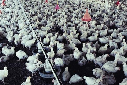 农业中的养殖