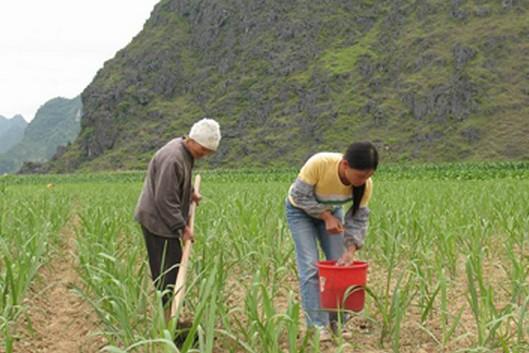农业中的种植
