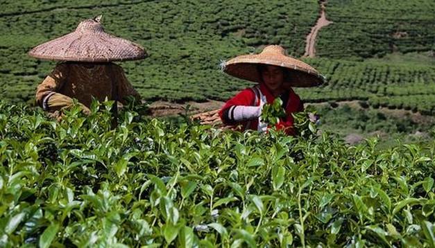 农业种植采收