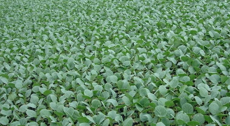 农业种植成效