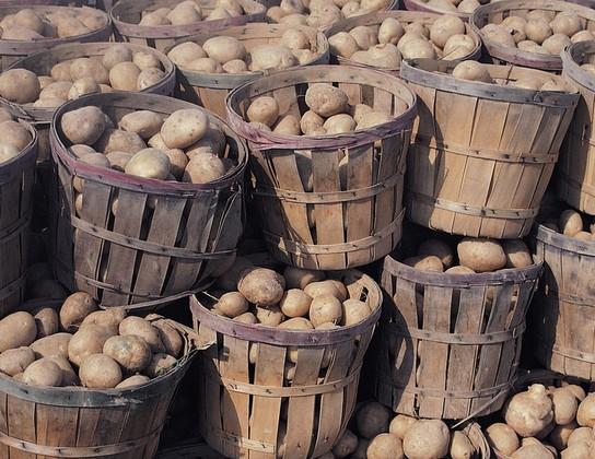 农业种植的收获