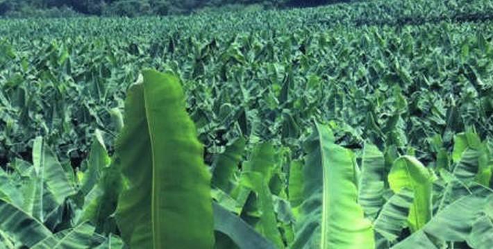 埔田生态农业观光风景区