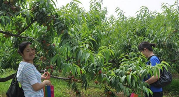 汝州农业生态