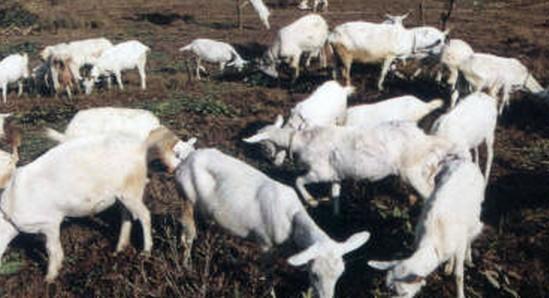 山区开发农业
