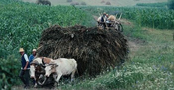 山区中的农业