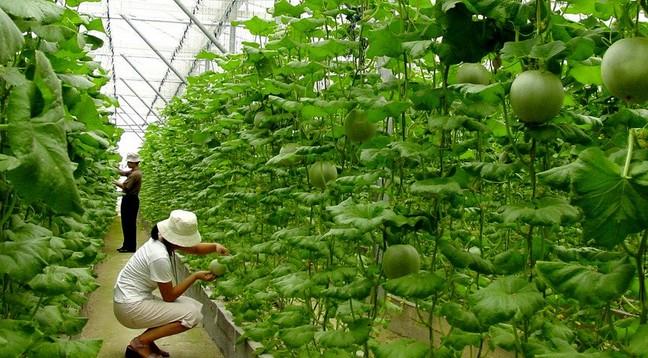 生态农业肥料和果实