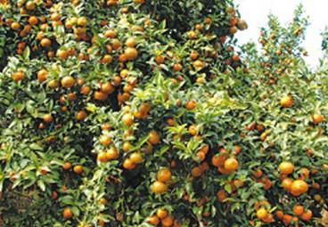 特色产业引领农业产业化发展