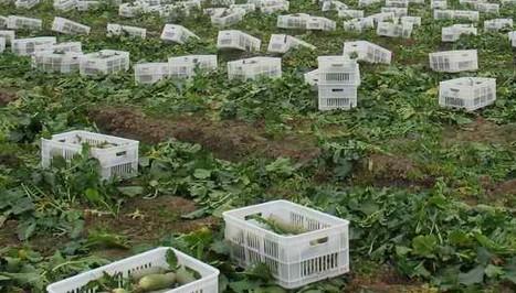 天津远大园生国际生态农业园