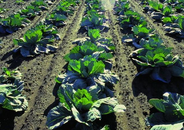 田园风光图片农业图