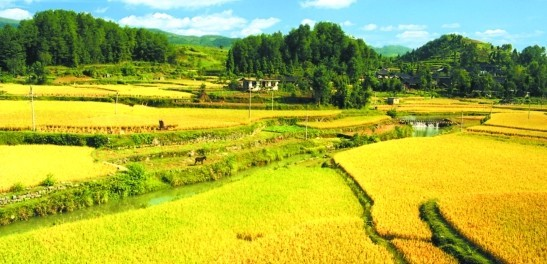 未来农业发展