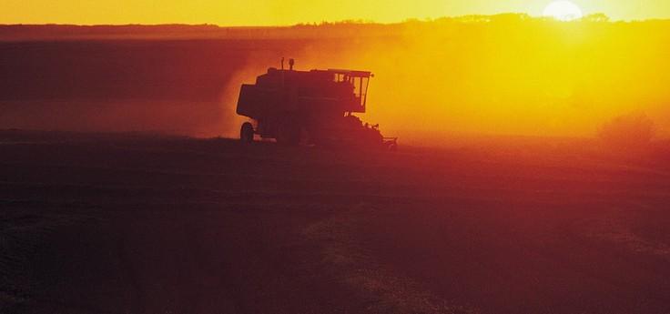 夕阳下的农业生产