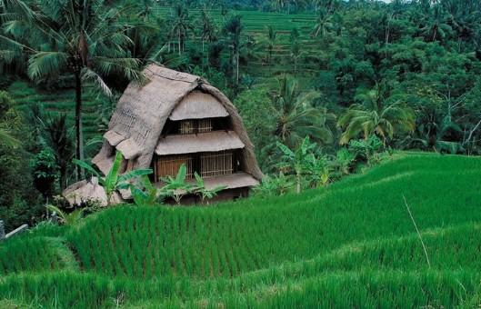 现代化农业种植2